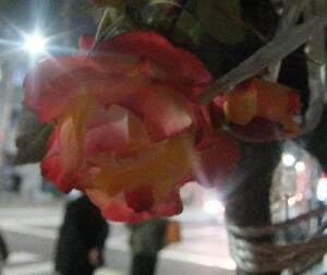 淡いばらの花びらが