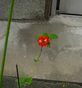 おこってる花