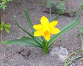 ままのような花