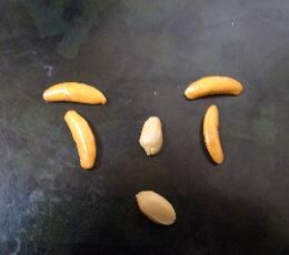 柿の種で百面相