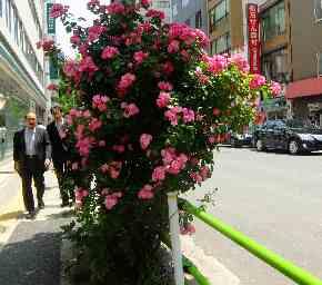 バラの歩道